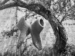 Knit Stockings on a Tree (shaire productions) Tags: old urban blackandwhite bw photo blackwhite image outdoor decay photograph imagery