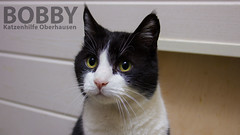 Bobby (Oliver Pietern) Tags: cat canon germany deutschland kitty domestic nrw katze paws shelter suchen oberhausen tierheim homeles tierschutz katzenhilfe