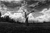 நிசப்தங்களின் ஓலம்  | Alone and dead.... (ayashok photography) Tags: ayashok ayashokphotography nikon nikonstunninggallery nikond700 tokina1735mm kodaikanal mannavanur lake tree standing dead bw blackwhite bnw cwc chennaiweekendclickers 2014 ayp9796 india indian bharath desi desh barat barath bharat asia asian