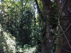 """Monteverde: Miss V sur une tyrolienne <a style=""""margin-left:10px; font-size:0.8em;"""" href=""""http://www.flickr.com/photos/127723101@N04/26393054053/"""" target=""""_blank"""">@flickr</a>"""