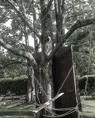 Tension (montrampolineetmoi) Tags: wood wild tree nature tension arbre svetlana jamet