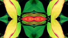 (ojoadicto) Tags: naturaleza abstract nature abstracto digitalmanipulation