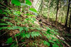 pemberton-enduro-ajbarlas-300416-4072.jpg (a r d o r) Tags: mtb pemberton mountainbikes mtbrace enduroracing ajbarlas ardorphotography pembertonenduro