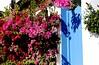 Buganvillas (camus agp) Tags: españa flores azul fachada canoneos puertas bougainvilleas sanpedroalcantara buganvillas