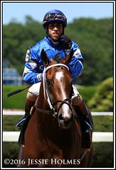 Kareena (Spruceton Spook) Tags: horses horseracing kareena belmontpark jerseygirl