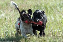 FAN_5004.jpg (Flemming Andersen) Tags: dogs denmark seaside hund dk hurup draget hurupthy northdenmarkregion helligsvej hebojebi