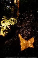 120603-26-Caprione-Liguria-Laspezia-21-Giugno-Farfalla-di-Luce-dorata-Solstizio-d-estate-light-golden-butterfly-summer-solstice-june.jpg (Paolo_Maggiani) Tags: 2003 calzolari caprione laspezia montemarcello farfalla farfalladiluce megalite