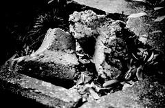 (wonder site) (Dinasty_Oomae) Tags: blackandwhite bw plant monochrome rock stone blackwhite kodak outdoor chiba   retinette funabashi