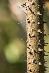 Bako National Park (tik_tok) Tags: forest asia hiking jungle sarawak malaysia borneo spines bakonationalpark