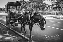 Kalesa (roswell2014) Tags: bw horse manila kalesa