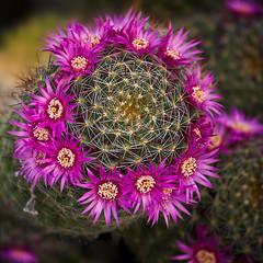 Desert Spring (dbpeterson723) Tags: spring bloom sedona arizona cactus