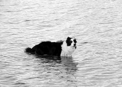 dog in the water (simplyclean33) Tags: park dog lake island mercer