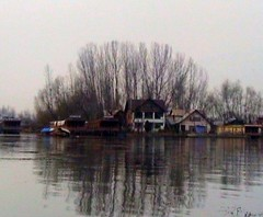 DSC00005 CHINAR TREES IN DAL LAKE IN SRINAGAR, KASHMIR, INDIA (Rajeev India (THANKS for views, comments n faves)) Tags: trees india lake dal kashmir srinagar in dallake chinar