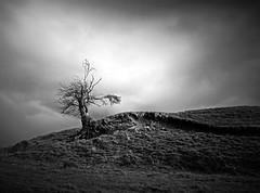 The Struggle (kenny barker) Tags: bw art monochrome landscape lumix scotland contemporary society fintry daarklands panasoniclumixgf1 welcomeuk kennybarker