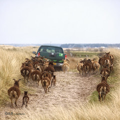 hot pursuit (gerrit de boorder) Tags: hollum achtervolging gdebfotografeert mygearandme april2012 vakantieopameland