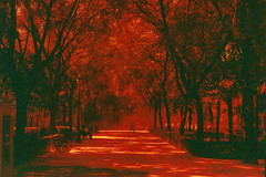 Red afternoon (josemanuelerre) Tags: park parque trees light red naturaleza black tree film luz sol nature bench landscape punto sevilla rojo rboles camino kodak path walk perspective banco paisaje rbol hoy pasear perspectiva calor fuga analogic analgico rado redscale retinas1