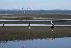 sandgate kite (ginny russell) Tags: sea people kite beach australia brisbane sandbanks sandgate sandflat