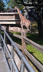 Kee Klamp Railing at the Chicago Zoo