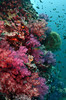 scwall9306 (gerb) Tags: ocean fish topv111 510fav nice topv555 topv333 underwater scuba fisheye similan tvp softcoral similanislands aquatica d7000 sigma1017fe