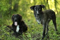 Da Boyz (wee3beasties) Tags: dog woods sooc