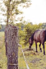 Horse-day! 36/365 (Sarah Messina) Tags: trees horses horse tree love grass animal canon project cheval eos pretty day erba 365 prato cavalli cavallo rete recinto 60d 365project