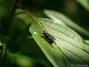 Fly / Fliege 20.05.2012