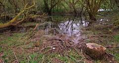 EDGE OF BURRATOR RESERVOIR (russell D7000 (D80)) Tags: trees reflection water reservoir devon stump grasses dartmoor burrator
