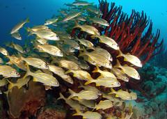 "School on the reef (gillybooze (David)) Tags: sea fish coral underwater bonaire sponges thegalaxy ©allrightsreserved spiritofphotography ""flickraward"" mygearandme mygearandmepremium madaleundewaterimages rememberthatmomentlevel4 rememberthatmomentlevel1 rememberthatmomentlevel2 rememberthatmomentlevel3"