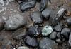 Muir Beach (kafkan) Tags: california rocks muirbeachca