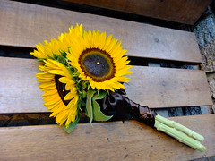 DSCF3578 (Vicky Spence) Tags: wedding flower yellow gardens wand alnwick northumberland sunflower bridesmaid