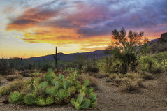 (BlackRockBacon) Tags: light sunset summer arizona cactus color nature june clouds photoshop landscape desert pentax tucson tripod tamron hdr k5 gatespass photomatix tonemapped sanoran tamron1750
