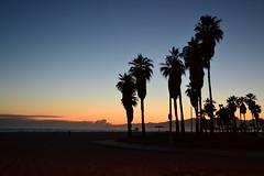 Atardecer, playa Venecia, Los Angeles, CA (EXPLORE) (ROCIO Ysapy) Tags: california sunset beach silhouette losangeles palmtrees boardwalk venicebeach