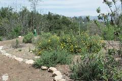 140320_3628.jpg (Weeding Wild Suburbia) Tags: park gardens publicgardens spnp