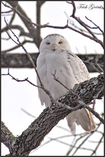 Snowy in a tree...