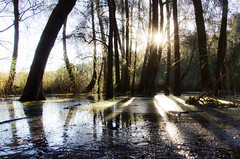 Afternoon at Narrabeen Lake (LSydney) Tags: trees shadow sun reflection water forest flare narrabeenlake