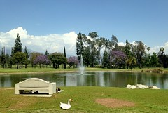 L.A. (dave87912) Tags: california blue trees summer sky lake green bench golf geese losangeles spring cool sunny rubber socal 626 sgv
