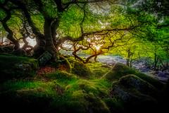 Fumes and Faith (unciepaul) Tags: longexposure morning trees green landscape early rocks very district tripod peak nd gorge sunray lightroom padley polariser nikond800