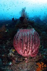Barrel Sponge (Randi Ang) Tags: bali coral canon indonesia photography eos underwater angle barrel wide dive scuba diving fisheye ang sponge 15mm randi 6d amed