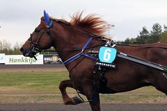 IMG_2253 (lovelymelancholy) Tags: horses horse hevoset hevonen horseraces ravit imrautio ravihevonen