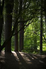 Forest patterns (haqiqimeraat) Tags: trees forest tentsmuirforest scotland nikon enlighten
