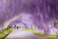 +70 PLACES SO COLORFUL ITS HARD TO BELIEVE THEYRE REAL (PhotographyPLUS) Tags: pictures graphics photos illustrations images stockphotos articles footage stockimage freephoto stockphotograph