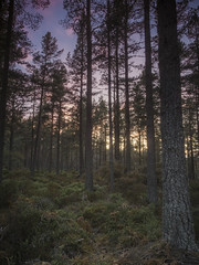 Abernethy Forest 002 (KeithProvenArtist) Tags: trees sunset scotland highlands gloaming cairngorms speyside cairngormnationalpark