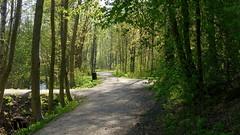 Spring in Patola (Helsinki, 20160508) (RainoL) Tags: forest finland geotagged spring helsinki path may helsingfors fin patola dammen oulunkyl 2016 uusimaa nyland fz200 ggelby 201605 20160508 geo:lat=6023813893 geo:lon=2496663452