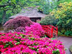 Japanese garden 4 (Frans Schmit) Tags: japan japanesegarden denhaag azalea thehague clingendael japansetuin fransschmit