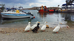 the meeting (Love me tender .**..*) Tags: sea sky seascape water colors birds landscape boats greek photography ngc ducks greece attica 2016 megara pahi dimitrakirgiannaki samsunggalaxya5