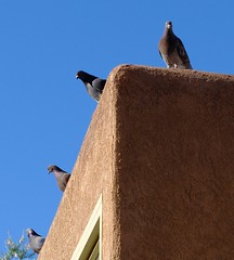 They Came For The Food! (Jo-I Have A New Group!) Tags: roof food waiting pigeons