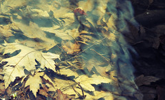 Submerged autumn