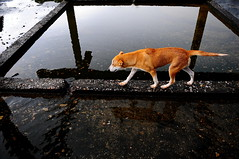 ,, Oblio & Arrow ,, (Jon in Thailand) Tags: roof dog reflection water puppy pumpkin point nikon tail jungle monsoon arrow nikkor k9 oblio d300 175528 littledoglaughedstories thedogpalace pointedforest