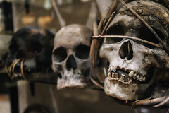 QF4C7775 (leslilundgren) Tags: skull teeth bones pittriversmuseum
