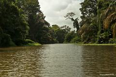 Canales del Parque Nacional Tortuguero 5 (pniselba) Tags: rio river costarica selva jungle tortuguero parquenacional parquenacionaltortuguero